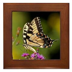 Eastern Tiger Swallowtail Butterfly Framed Tile