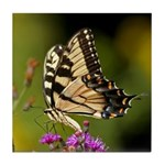 Eastern Tiger Swallowtail Butterfly Tile Coaster