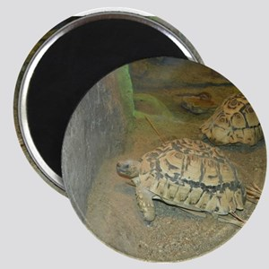 Turtles Magnets