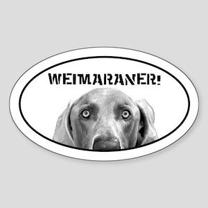 Weimaraner In A Box! Oval Sticker