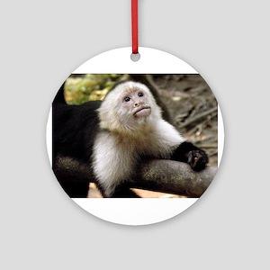 Baby Capuchin Monkey Round Ornament