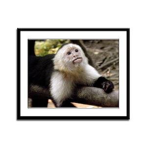 Baby Capuchin Monkey Framed Panel Print