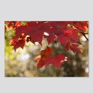 Fall Foliage Postcards (Package of 8)