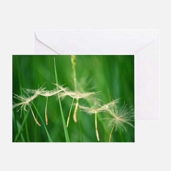Cute Dandelion seeds blowing in the wind Greeting Card