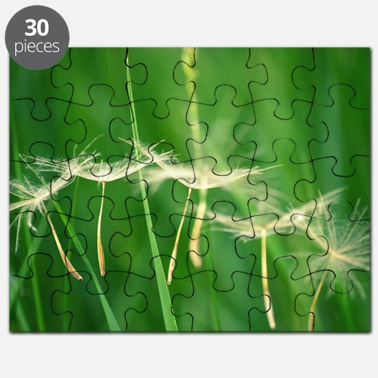 Cool Dandelion seeds blowing in the wind Puzzle