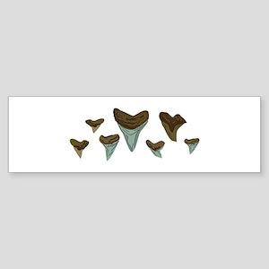 Shark Teeth Bumper Sticker