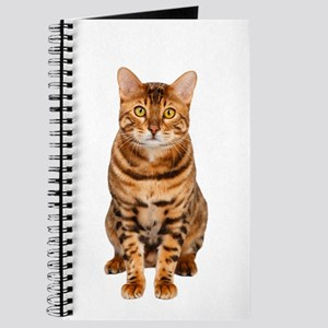 Amazing Bengal Kitten Journal