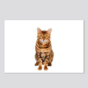 Amazing Bengal Kitten Postcards (Package of 8)