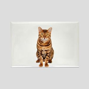 Amazing Bengal Kitten Magnets