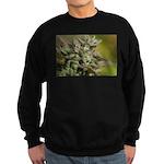 Cherry Pie Sweatshirt