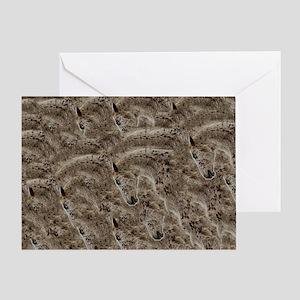 Appaloosa Pattern Greeting Card