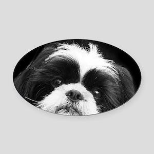 Shih Tzu Dog Oval Car Magnet
