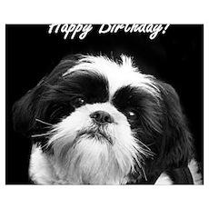 Birthday Shih Tzu Poster