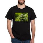Harlequin T-Shirt