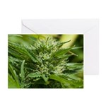 Boost Greeting Cards (pk Of 10)