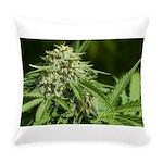 Cindy La Pew Everyday Pillow