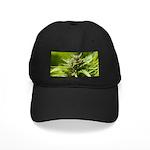Harlequin Black Cap