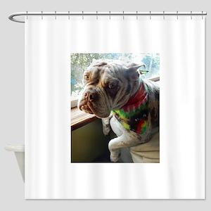 Olde English Bulldogge Shower Curtain