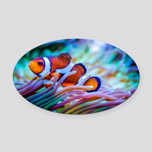 Clownfish Oval Car Magnet