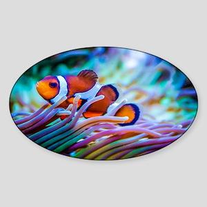 Clownfish Sticker (Oval)