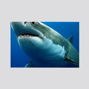 GREAT WHITE SHARK 3 Rectangle Magnet
