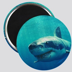 GREAT WHITE SHARK 1 Magnet