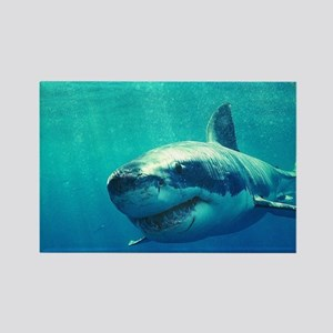 GREAT WHITE SHARK 1 Rectangle Magnet