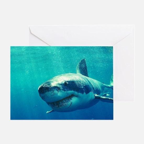 GREAT WHITE SHARK 1 Greeting Card