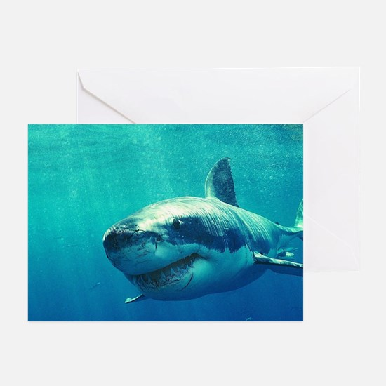 GREAT WHITE SHARK 1 Greeting Cards (Pk of 20)