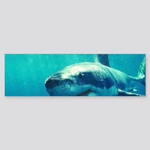 GREAT WHITE SHARK 1 Sticker (Bumper)