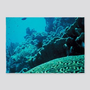 CORAL REEFS 2 5'x7'Area Rug