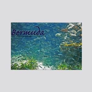 Bermuda - Fish Rectangle Magnet Magnets