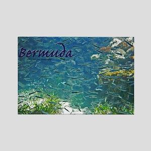 Bermuda - Fish Rectangle Magnet Magnets