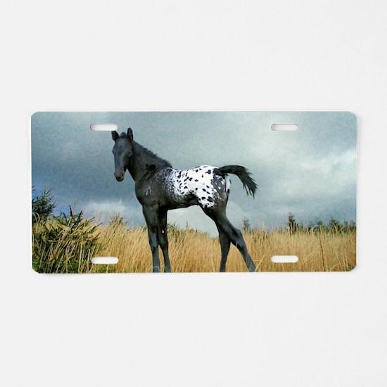 Appaloosa Colt Horse Aluminum License Plate