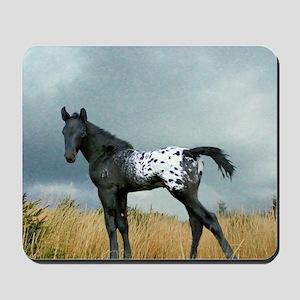 Appaloosa Colt Horse Mousepad
