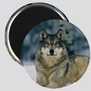 Wolf In The Snow Magnets
