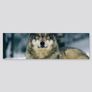 Wolf In The Snow Bumper Sticker