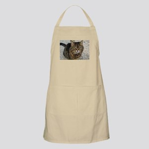 All cats are grumpy cats Apron