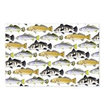 Seatrout and Drum Pattern Postcards (Package of 8)
