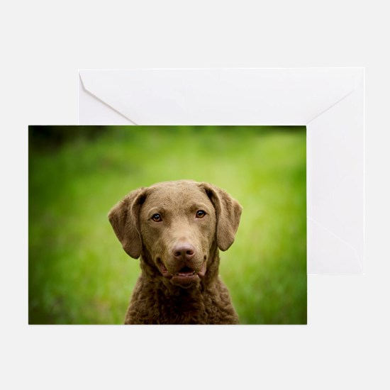 Funny Chessie Greeting Card