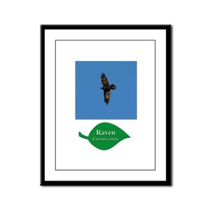 Raven in Flight Framed Panel Print