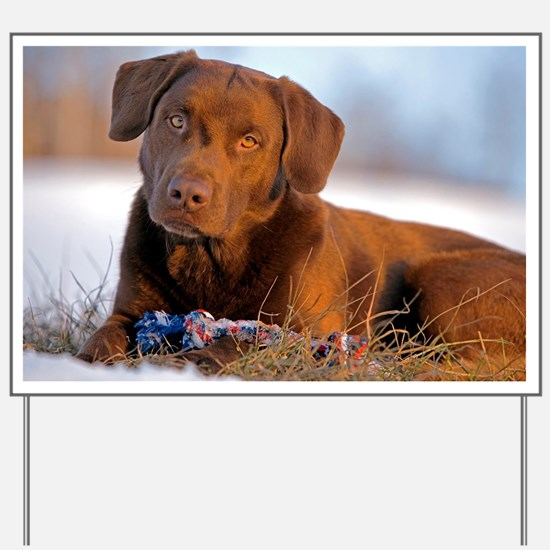 Cute Labrador playing Yard Sign