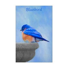 Bluebird on Birdbath Posters