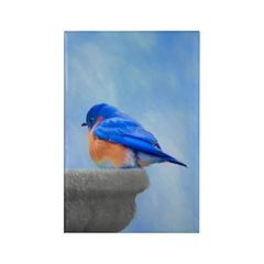 Bluebird on Birdbath Rectangle Magnet (10 pack)
