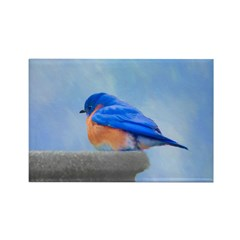 Bluebird on Birdbath Rectangle Magnet (10 pack)