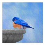 Bluebird on Birdbath Square Car Magnet 3