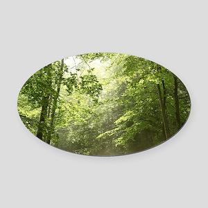 Spring Forest Mist Oval Car Magnet