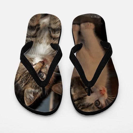 CUTE KITTIES Flip Flops