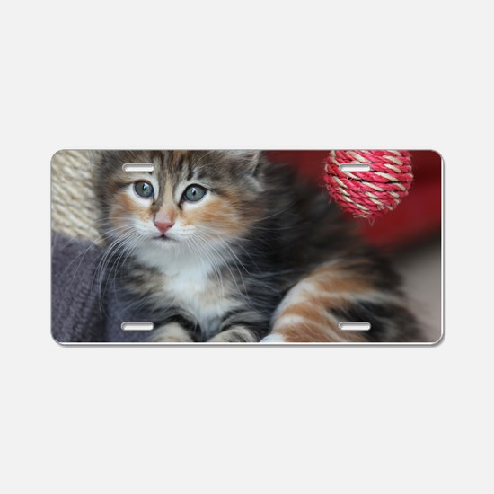 COMFY KITTY Aluminum License Plate