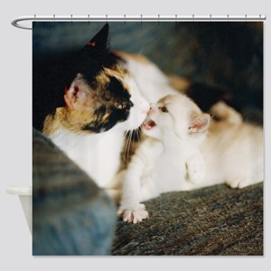 CALICO CAT AND WHITE KITTY Shower Curtain